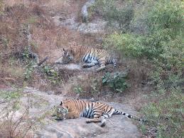 Bandhavgarh National Park – Travel guide at Wikivoyage