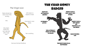Virgin Lion vs Chad Honey Badger : virginvschad