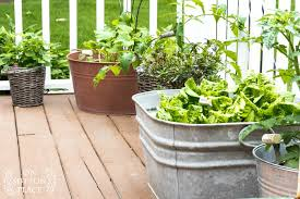 Easy Container Gardening Herbs Vegetables On Sutton Place
