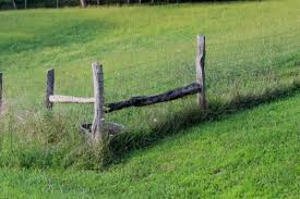 The Best Goat Fencing Options To Keep Goats In Their Yard