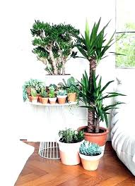 indoor fairy garden ideas rileydecor co