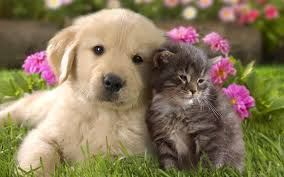 Cute Dog and Cat Wallpaper (Görüntüler ile) | Tablolar