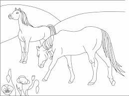 Kleuren Nu 2 Paarden 16 Kleurplaten