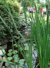 garden pond wikipedia