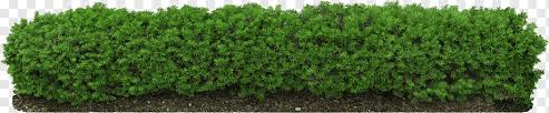Hedge Plants Fence Ornamental Prune Png Pngwing