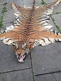 extinct javan tiger skin rug taxidermy