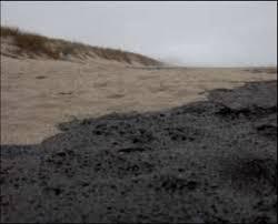Oil on Papamoa Beach, 12 October 2011. Photo credit: Tania Smith ...
