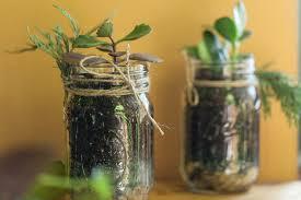 make a diy mason jar succulent garden