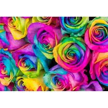 tow dozen rainbow rose bouquet the