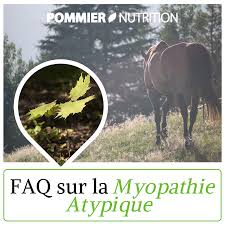 atypical myopathy in 5 questions