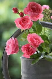 صور ورود هادئة Pesquisa Google With Images Flowers