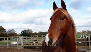 We Love Horses at Redwings Ada Cole! | Redwings Horse Sanctuary and Equine  Veterinary Centre