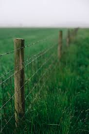 Fence Post And Barbed Wire In A Lush Field By Cameron Whitman Fence Field Stocksy United