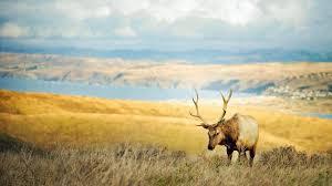 elk wallpapers 4k 1920x1080 px