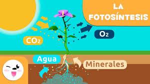 Resultado de imagen de La fotosíntesis