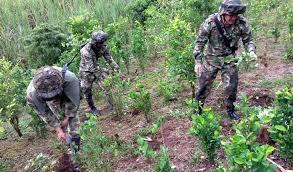 EE.UU aumenta presupuesto para lucha contra drogas en Colombia ...
