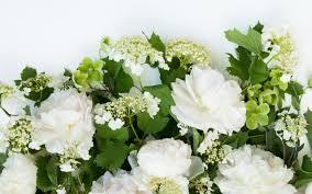 تحميل خلفيات الزهور البيضاء زهرة إطار الربيع الورود البيضاء