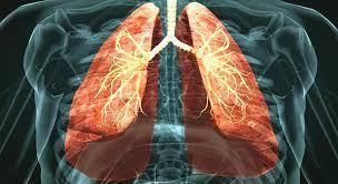 Respiratory system - 3D scene - Mozaik Digital Learning