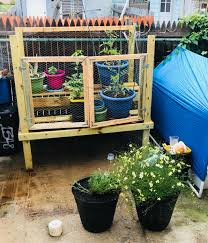 Homemade Urban Garden My Boyfriend Built This For Me Two Shelves Chicken Wire And Doors Salsa Garden With Some Extra Herbs I Recycled Old Cat Litter Containers And Some Pots That I