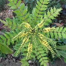 evergreen plants with plantpost