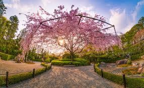 10 glorious gardens of kyoto travel