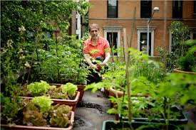 rooftop gardens and urban farms in nyc