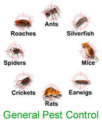 Pesticides Company Of India - Service Provider of General Pest Control  Service & Termite Control Service from Mumbai