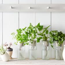 Our Best Tips Tools For Starting An Indoor Garden
