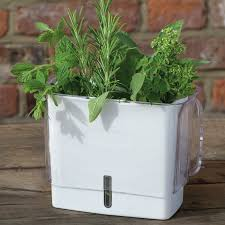 cole mason fresh herb keeper plastic