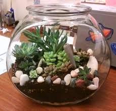 make a terrarium mini garden nasa