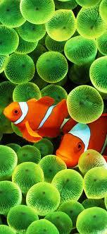 fish iphone wallpapers top free fish