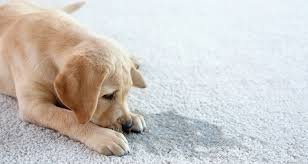 pet odors in your carpet tile