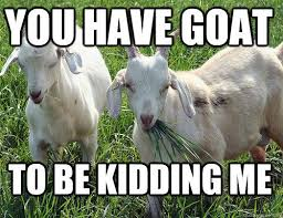 goat quotes for every occasion goats funny animal quotes