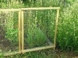 Framed Chicken Wire Fence Chicken Wire Fence Backyard Fences Chicken Fence