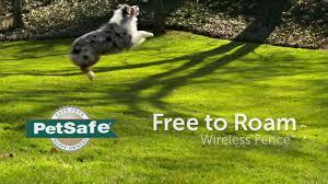 Petsafe Free To Roam Wireless Pet Fence Dog Fence Systems Petsmart