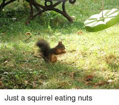 Squirrel And Squirrel Meme On Me Me