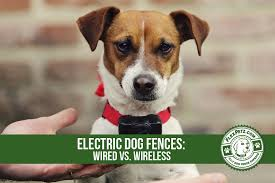 Electric Dog Fences Should I Get A Wired Vs Wireless System