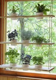 herb garden in kitchen