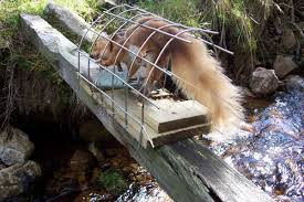 squirrel trap types of squirrels