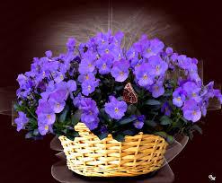أجمل صور زهرة البنفسج