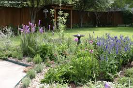perennial flowers for north texas