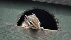 How to Get Rid of Chipmunks—and Keep Them Away for Good | realtor.com?