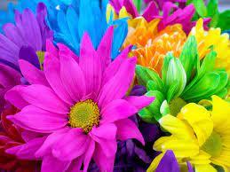 صور ورود 2020 تشكيلة صور زهور جميلة أجمل صور ورد ملونة 2019