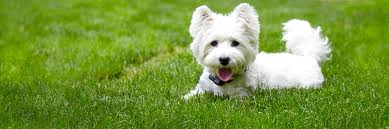 Dogwatch By Topdog Pet Fence Hidden Dog Fences It S All About Your Dog