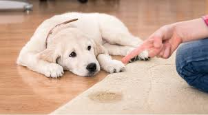 pet sns and odors from carpet