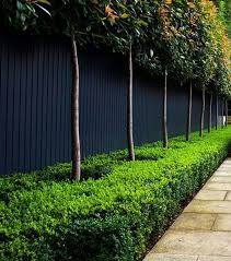 Awesome Fence With Evergreen Plants Landscaping Ideas 57 Hoommy Com