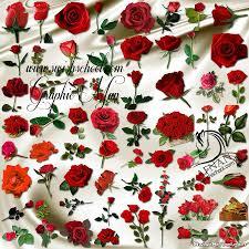 Png اجمل الورود الحمراء المفرغه عاليه الجوده Png ورد احمر