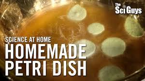 homemade petri dish