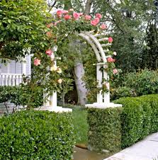 Boxwood Better Homes Gardens