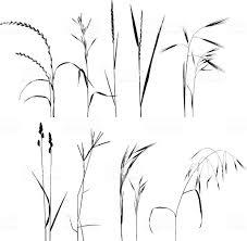 Grass Collection Trawa Proste Rysunki Rysunki